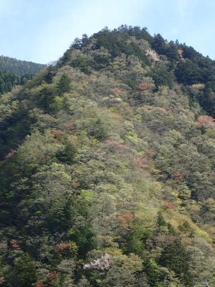 P4120157惣岳山? (443x590).jpg