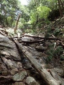 P6181978流水木で荒れた山肌1133 (210x280).jpg
