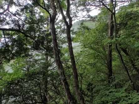 P7012237木々合間風景1218 (443x332).jpg