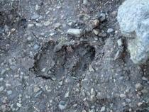 P7094256鹿の足跡 (210x158).jpg