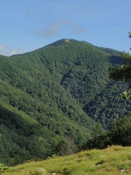P7094294雲取山・七ツ石山から757 (443x590).jpg
