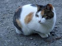 PB018092猫1304 (210x158).jpg